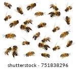 honey bees on white background | Shutterstock . vector #751838296