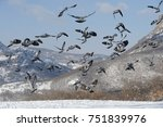 wood pigeon fly in the winter | Shutterstock . vector #751839976
