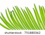 cycas leaves isolated on white  | Shutterstock . vector #751880362