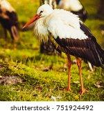 stork | Shutterstock . vector #751924492