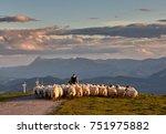 Flock Of Sheep With Shepherd I...