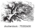 alice in wonderland. cheshire... | Shutterstock .eps vector #75202630