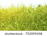close up green and yellow rice... | Shutterstock . vector #752095438
