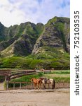 horses for horseback riding at... | Shutterstock . vector #752103535