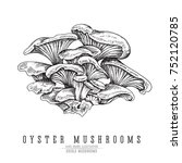 oyster mushrooms vector sketch... | Shutterstock .eps vector #752120785