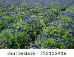 bluebonnets at lady bird...   Shutterstock . vector #752123416