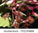 park asia thailand flowers  | Shutterstock . vector #752154886