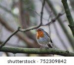 curious robin on a branch | Shutterstock . vector #752309842