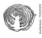 illustration half cabbage ... | Shutterstock .eps vector #752329255
