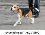Stock photo puppy on walk 75234892