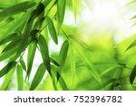 bamboo   Shutterstock . vector #752396782