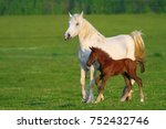 Two Horses  Brown Foal And...