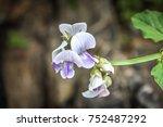 om beach gokarna india jungle... | Shutterstock . vector #752487292