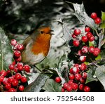 Christmas Robin Singing In...
