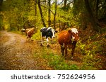 cows on a rural road with a... | Shutterstock . vector #752624956