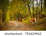 cows on a rural road with a... | Shutterstock . vector #752624962
