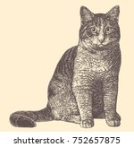 Cat. Hand Drawn Engraving....