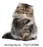 Stock photo persian kitten months old with paw up in front of white background 752719588