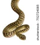 morelia spilota variegata  a... | Shutterstock . vector #752724085