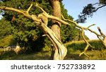 Small photo of Close up of the twisted branches of a beautiful tree in the woodland in Brandon near Thetford forest in Suffolk Eat Anglia England in Autumn sunlight