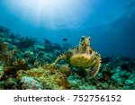 Small photo of loggerhead turtle swimming over a coral reef with sun rays