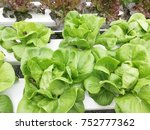 organic hydroponic vegetable... | Shutterstock . vector #752777362