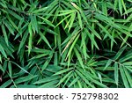 green bamboo leaves background | Shutterstock . vector #752798302