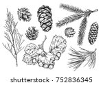 set of different branches  and... | Shutterstock . vector #752836345