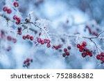 winter scene. frozen nature... | Shutterstock . vector #752886382