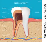 vector tooth structure. cross... | Shutterstock .eps vector #752893195
