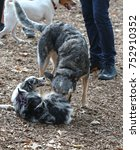 Small photo of Dogs of varies breeds cavort & play at dog run in urban park
