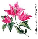 bougainvillea flower bouqet...   Shutterstock . vector #752957296