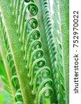 green fern leaves background.... | Shutterstock . vector #752970022