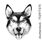 dog head ink sketch  | Shutterstock . vector #752977375