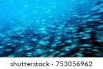 coral reef. diving. underwater... | Shutterstock . vector #753056962
