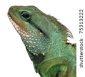 green lizard head - stock photo