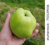 Small photo of Fat Apple, malus, domestica
