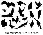 vector bird silhouettes   Shutterstock .eps vector #75315409