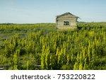 the coast of the polar sea ... | Shutterstock . vector #753220822