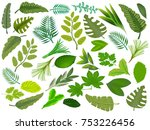set of green tropical leaves... | Shutterstock .eps vector #753226456