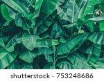 tropical banana leaf texture ... | Shutterstock . vector #753248686