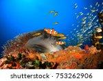 clown anemonefish  clownfish  ... | Shutterstock . vector #753262906