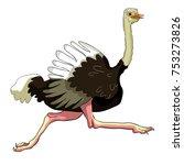 the african bird ostrich is... | Shutterstock .eps vector #753273826