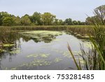 swamp leading to minnetonka... | Shutterstock . vector #753281485