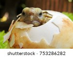 Stock photo cute baby tortoise hatching on green leaves cute baby tortoise sunbathe and resting on egg the 753286282