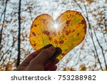 Hand Holding Autumn Leaf In...