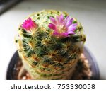 a beautiful cactus flower in a... | Shutterstock . vector #753330058