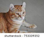 this cat looks like a small... | Shutterstock . vector #753339352
