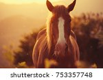 Stock photo brown horse on pasture in beautiful warm sunlight rays 753357748
