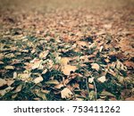 autumn leaves on grass. | Shutterstock . vector #753411262